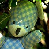 Burschi Bär - Im Apfelbaum
