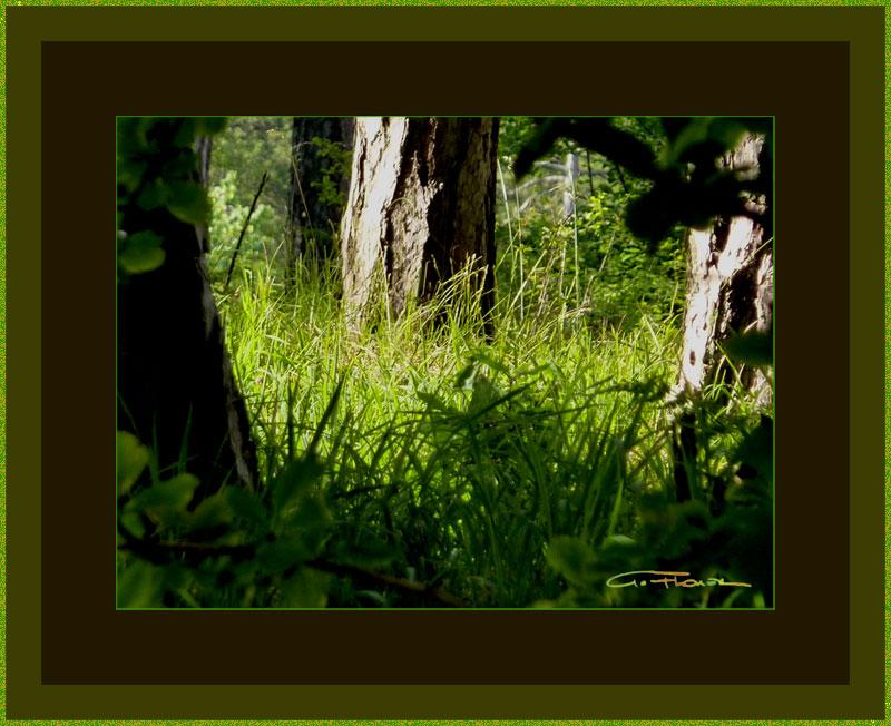 Vier Lichtbilder von Augenblicken in einem Wald