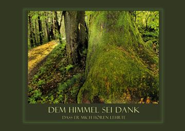 Textbild 39 - Im Wald