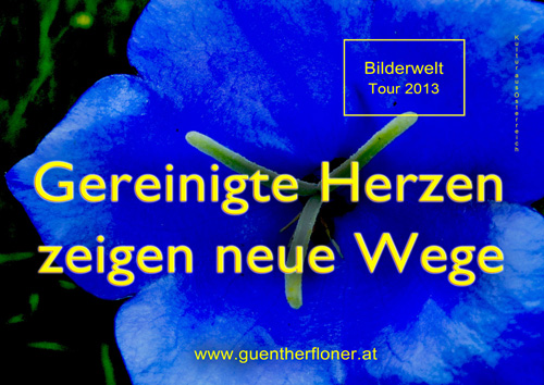 Gereinigte Herzen zeigen neue Wege - blaue Blüte