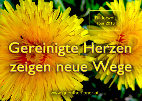 Gereinigte Herzen zeigen neue Wege - gelbe Blüte