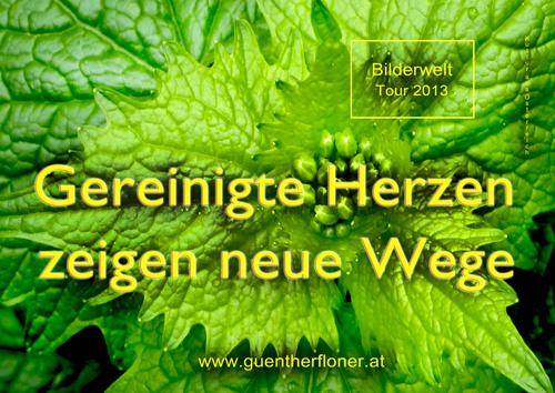 Gereinigte Herzen zeigen neue Wege - grüne Blüte