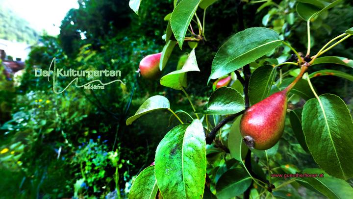 Der Kulturgarten-wild&frei - Saftige Birnen