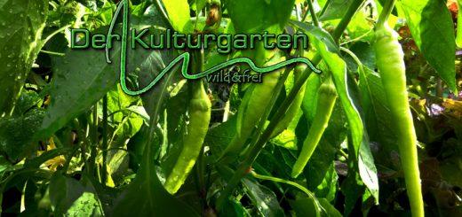 Der Kulturgarten -wild und frei - Inmitten Paprika