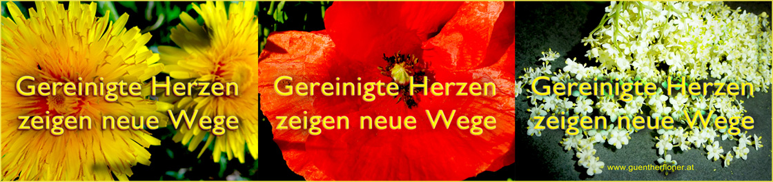 Gereinigte Herzen - pictureline 01
