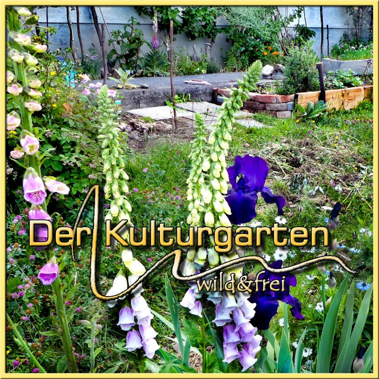 Wenn Sie hier klicken, öffnet sich die Webseite Der Kulturgarten wild und frei